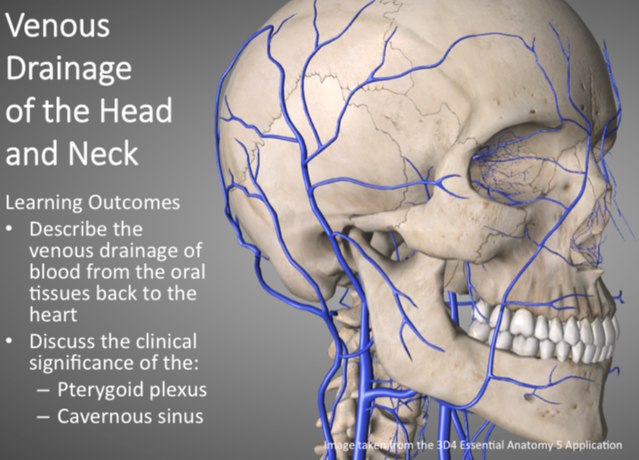 Venous Draining of the Head and Neck   H5P
