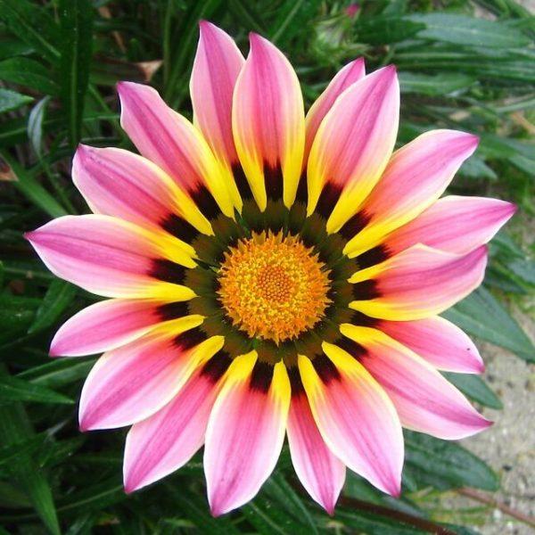 El jardín de Flores | H5P