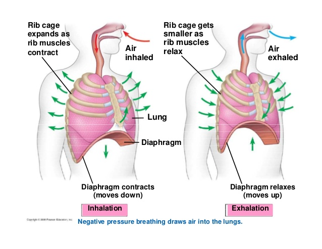 breathe in and breathe out upper primary stage to know steps rh h5p org comparing inhalation and exhalation diagram Lungs Inhaling and Exhaling