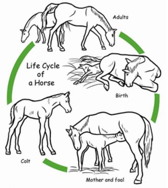 Animal Life Cycles | H5P