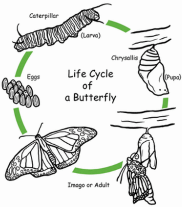 Animal Life Cycles | H5P